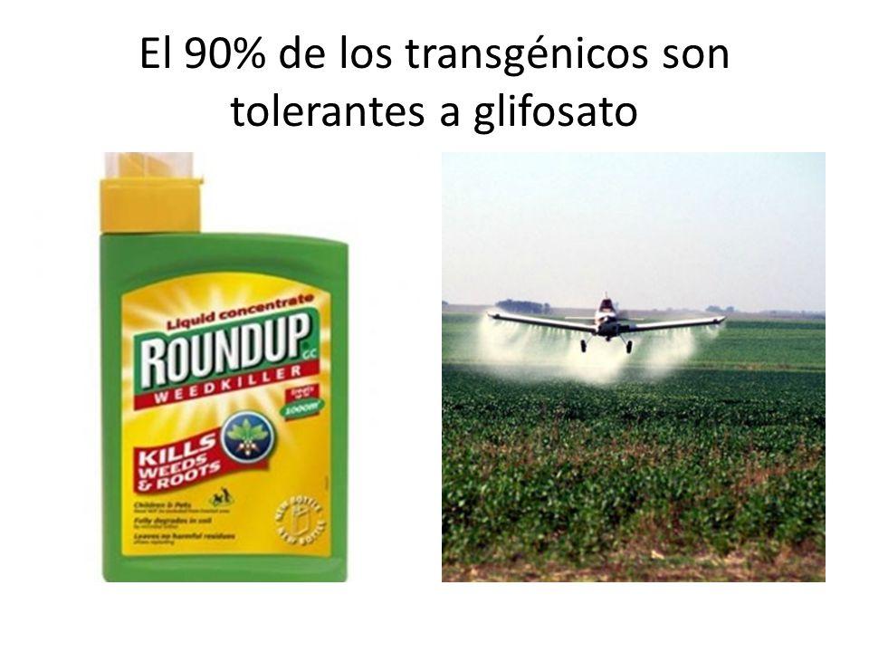 El 90% de los transgénicos son tolerantes a glifosato