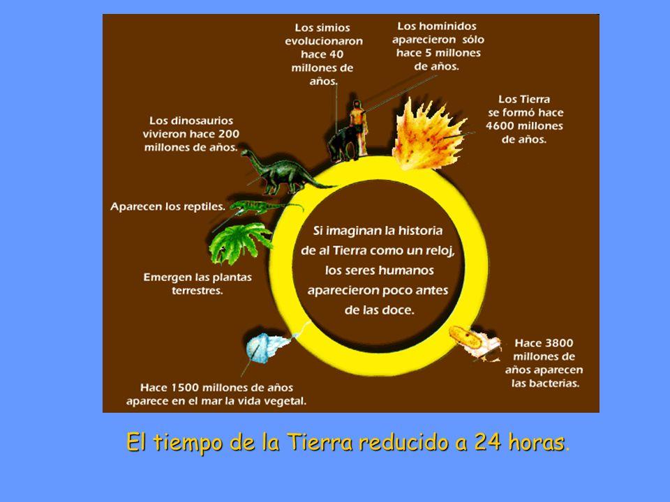 El tiempo de la Tierra reducido a 24 horas.