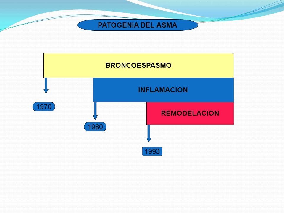 PATOGENIA DEL ASMA BRONCOESPASMO INFLAMACION 1970 REMODELACION 1980 1993