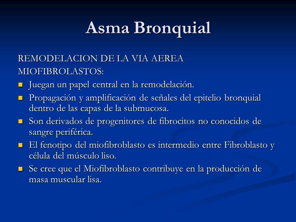 Asma Bronquial REMODELACION DE LA VIA AEREA MIOFIBROLASTOS: