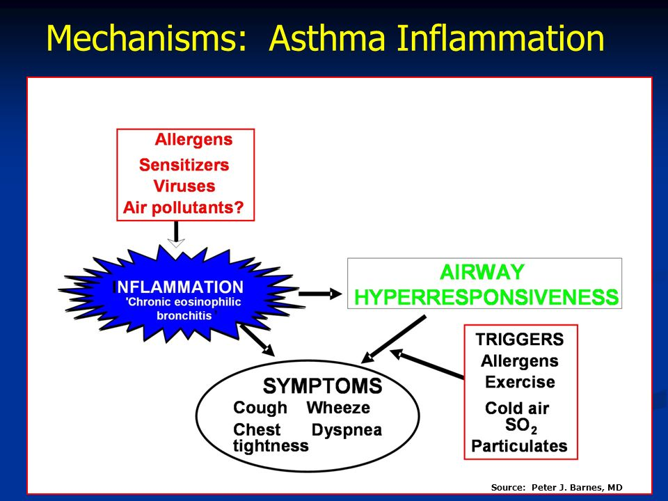 Mechanisms: Asthma Inflammation