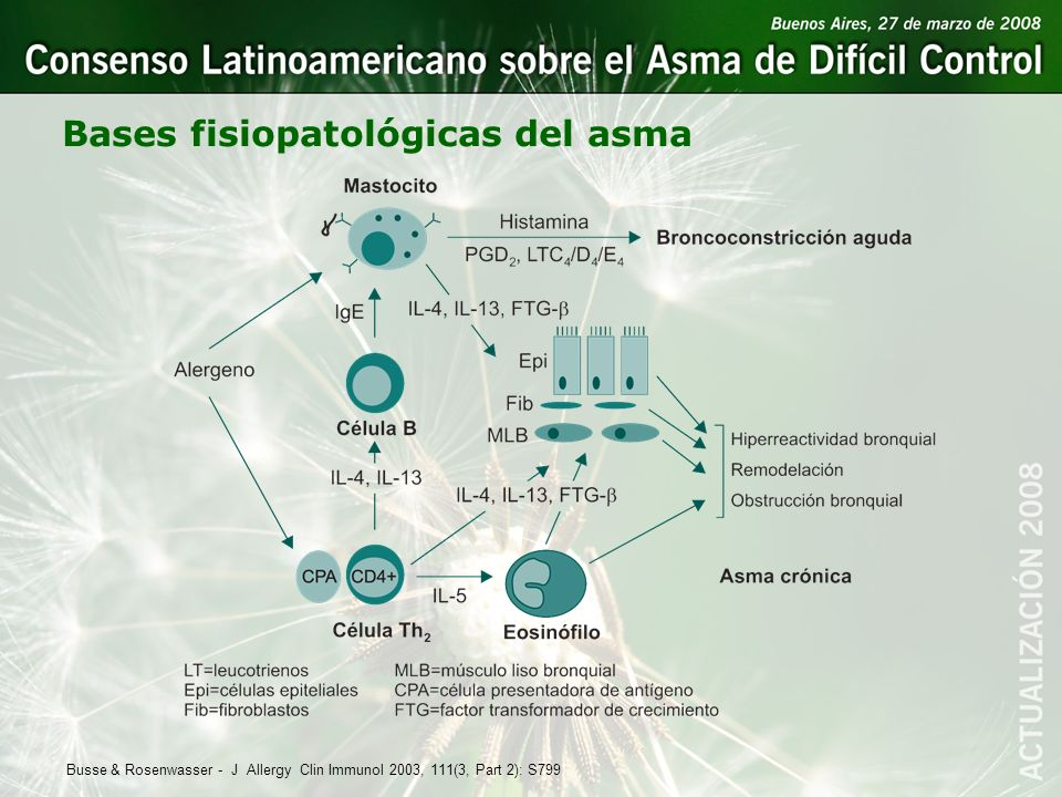 Bases fisiopatológicas del asma