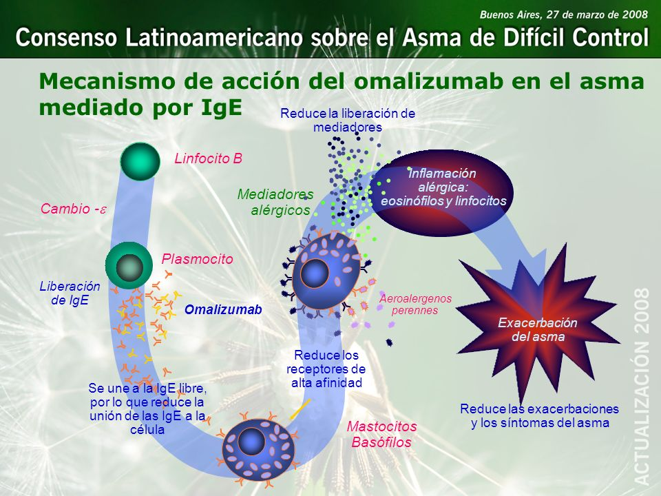 Mecanismo de acción del omalizumab en el asma mediado por IgE