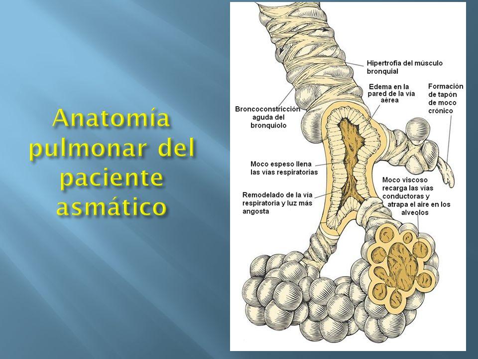 Anatomía pulmonar del paciente asmático