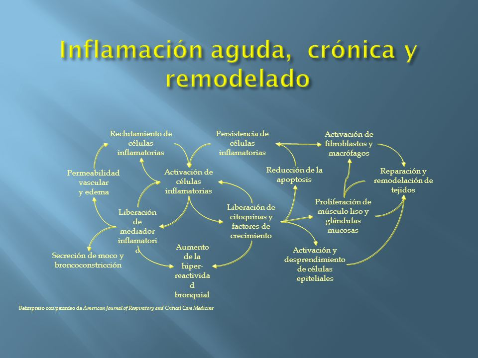 Inflamación aguda, crónica y remodelado