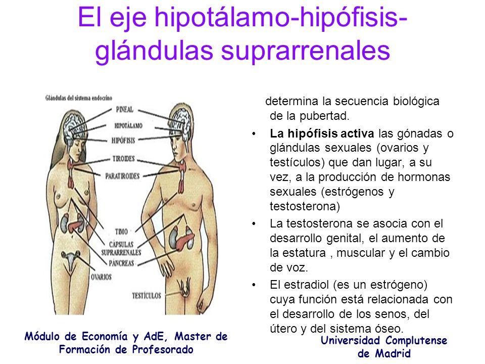 El eje hipotálamo-hipófisis-glándulas suprarrenales