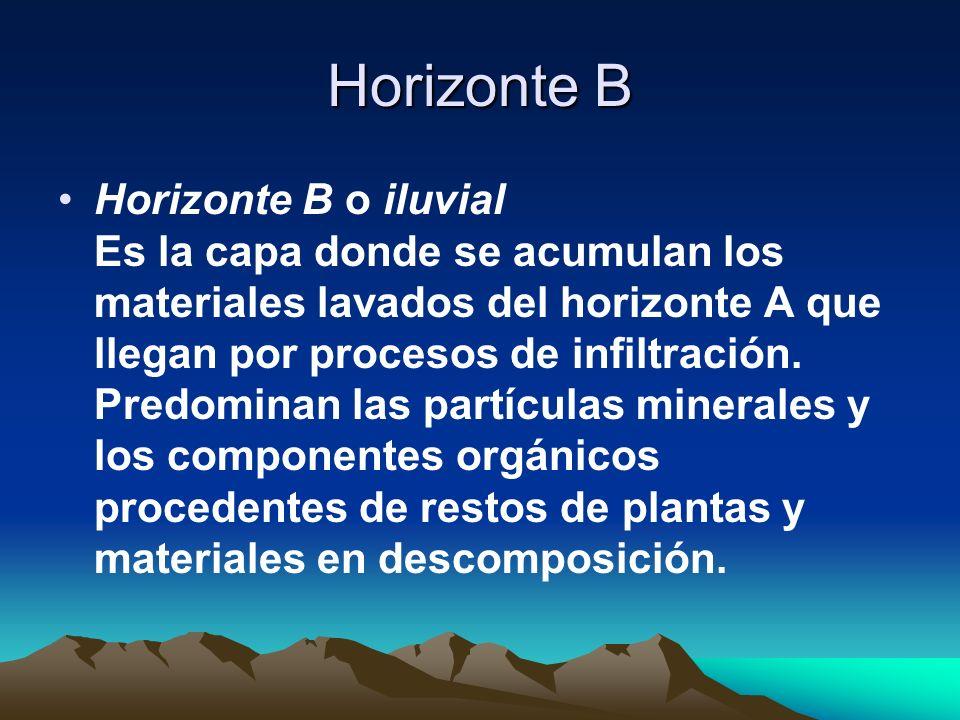 Horizonte B