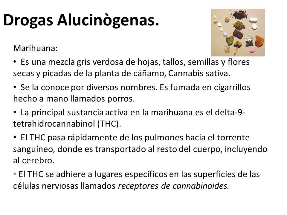 Drogas Alucinògenas. Marihuana:
