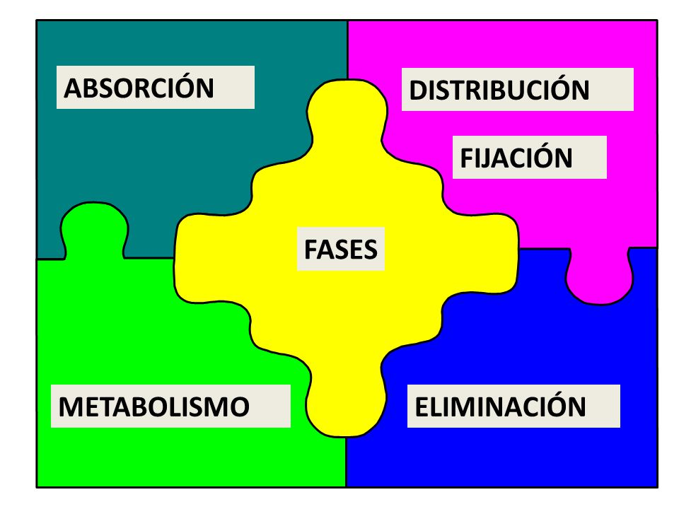 ABSORCIÓN DISTRIBUCIÓN FIJACIÓN FASES METABOLISMO ELIMINACIÓN