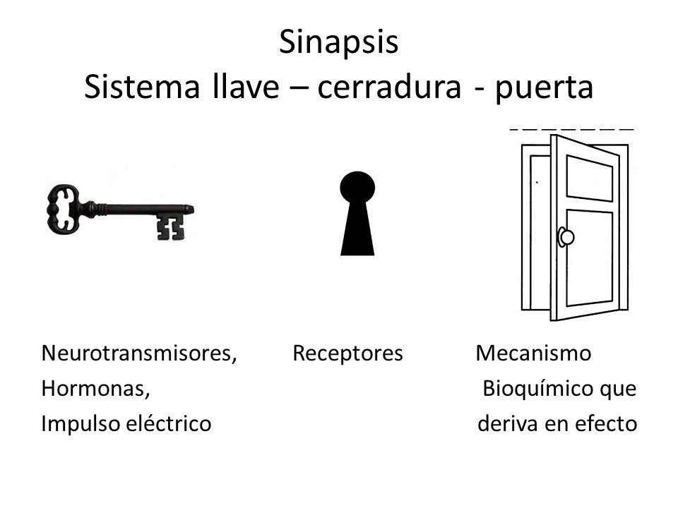 Sinapsis Sistema llave – cerradura - puerta