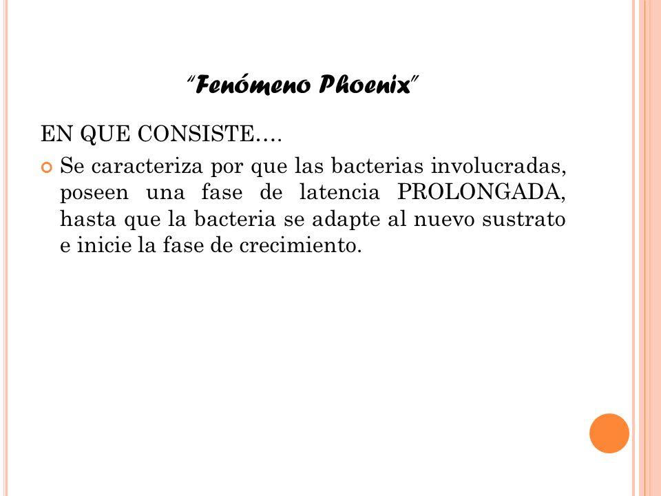 Fenómeno Phoenix EN QUE CONSISTE….