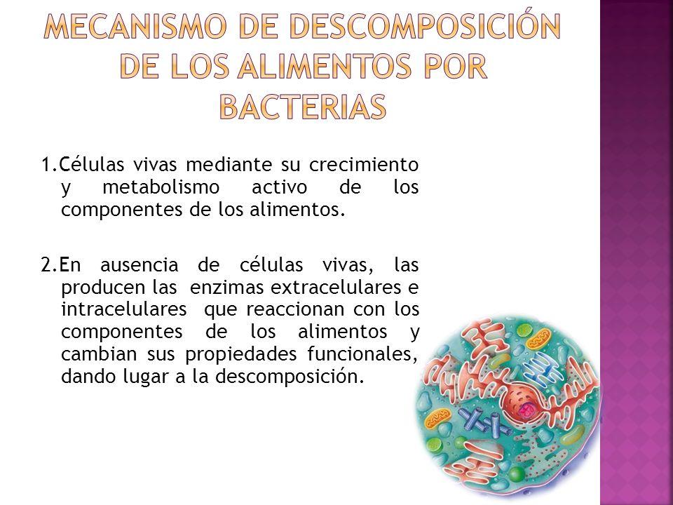 Mecanismo de descomposición de los alimentos por bacterias