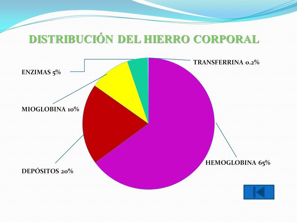DISTRIBUCIÓN DEL HIERRO CORPORAL