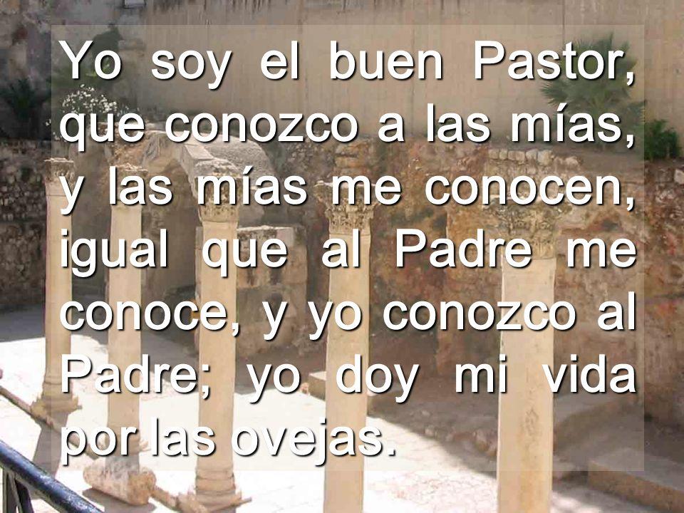 Yo soy el buen Pastor, que conozco a las mías, y las mías me conocen, igual que al Padre me conoce, y yo conozco al Padre; yo doy mi vida por las ovejas.