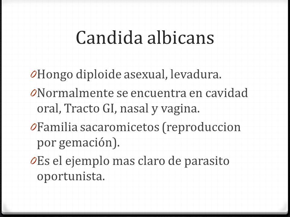 Candida albicans Hongo diploide asexual, levadura.