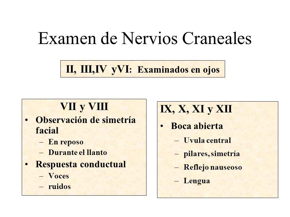 Examen de Nervios Craneales