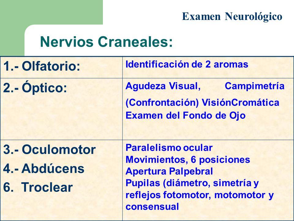 Nervios Craneales: 1.- Olfatorio: 2.- Óptico: 3.- Oculomotor