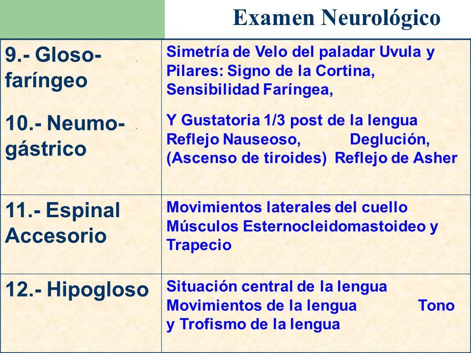 Examen Neurológico 9.- Gloso- - faríngeo 10.- Neumo- - gástrico