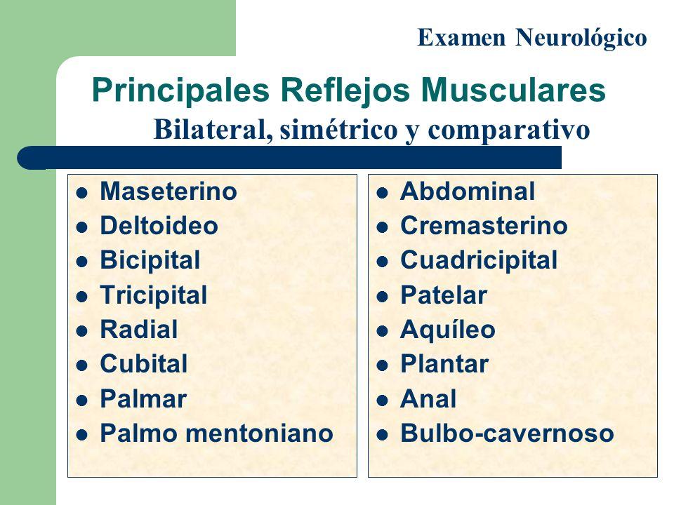 Principales Reflejos Musculares