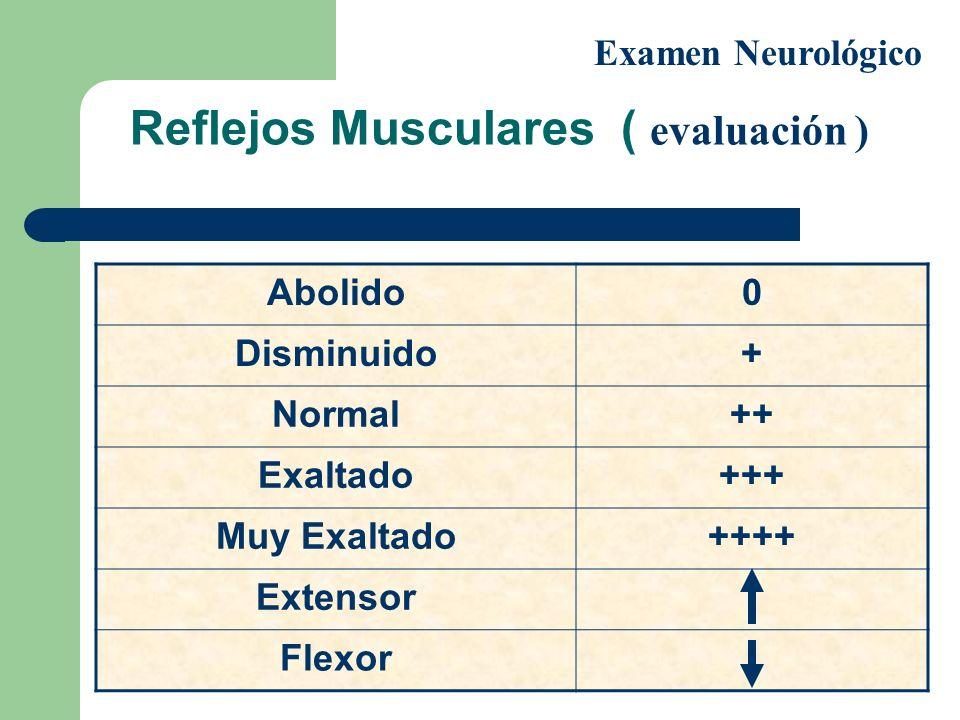 Reflejos Musculares ( evaluación )