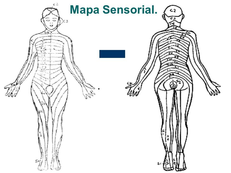 Mapa Sensorial.