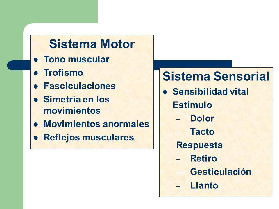 Sistema Motor Sistema Sensorial