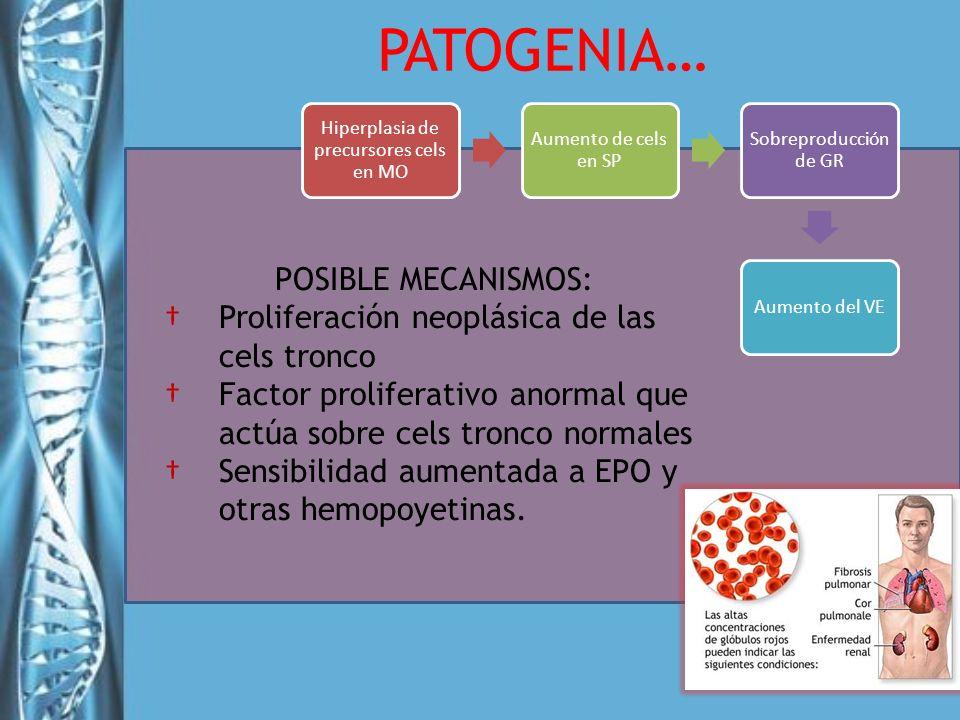 Hiperplasia de precursores cels en MO