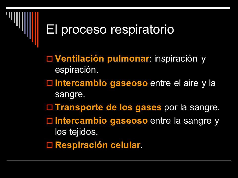 El proceso respiratorio