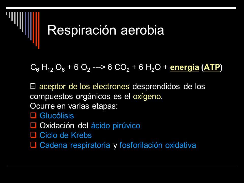 Respiración aerobiaC6 H12 O6 + 6 O2 ---> 6 CO2 + 6 H2O + energía (ATP)