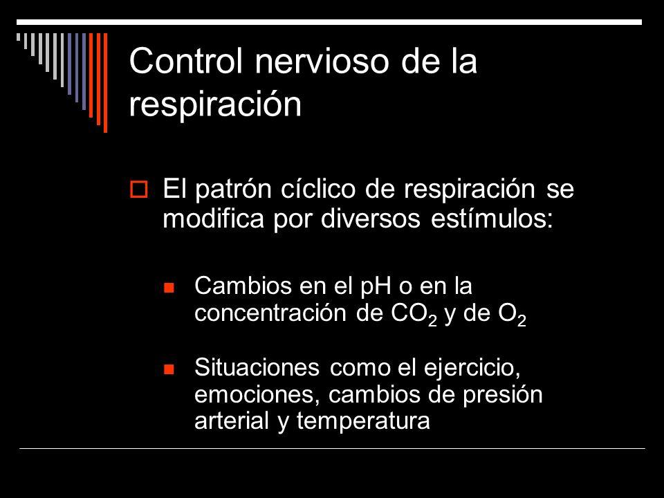 Control nervioso de la respiración