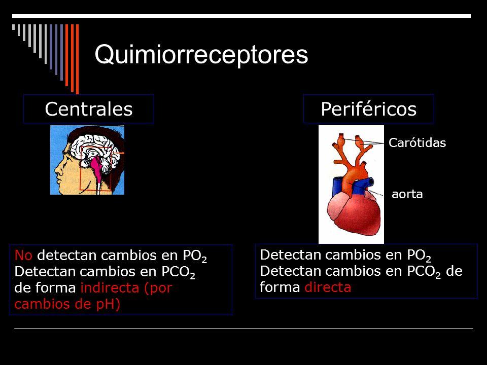 Quimiorreceptores Centrales Periféricos No detectan cambios en PO2