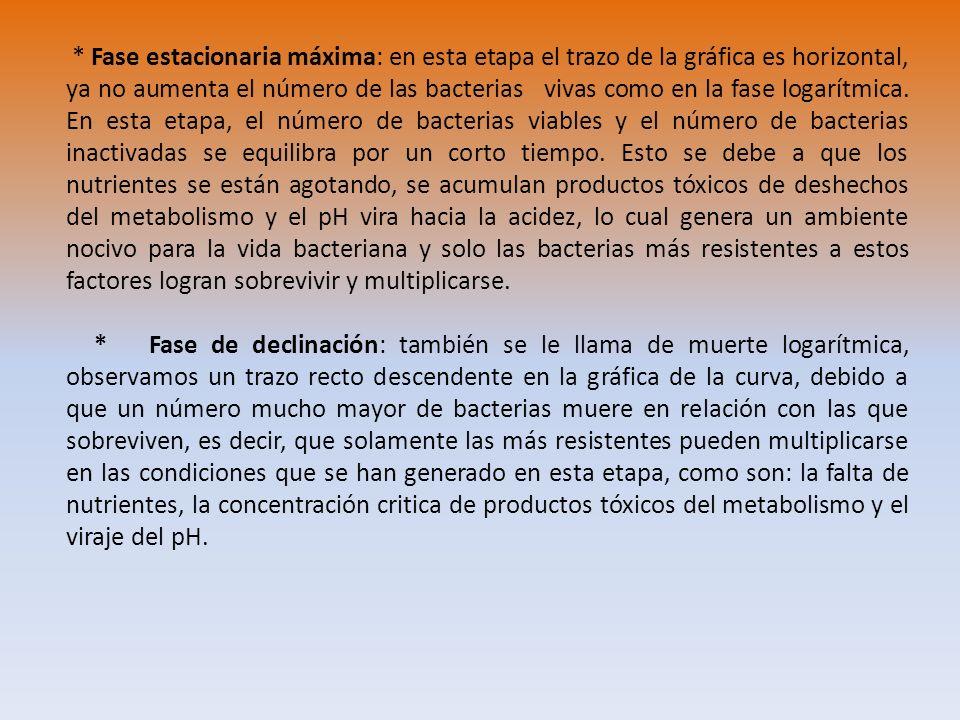 * Fase estacionaria máxima: en esta etapa el trazo de la gráfica es horizontal, ya no aumenta el número de las bacterias vivas como en la fase logarítmica. En esta etapa, el número de bacterias viables y el número de bacterias inactivadas se equilibra por un corto tiempo. Esto se debe a que los nutrientes se están agotando, se acumulan productos tóxicos de deshechos del metabolismo y el pH vira hacia la acidez, lo cual genera un ambiente nocivo para la vida bacteriana y solo las bacterias más resistentes a estos factores logran sobrevivir y multiplicarse.