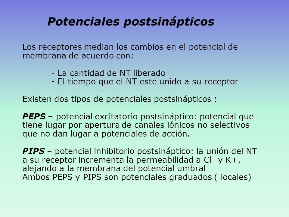 Potenciales postsinápticos
