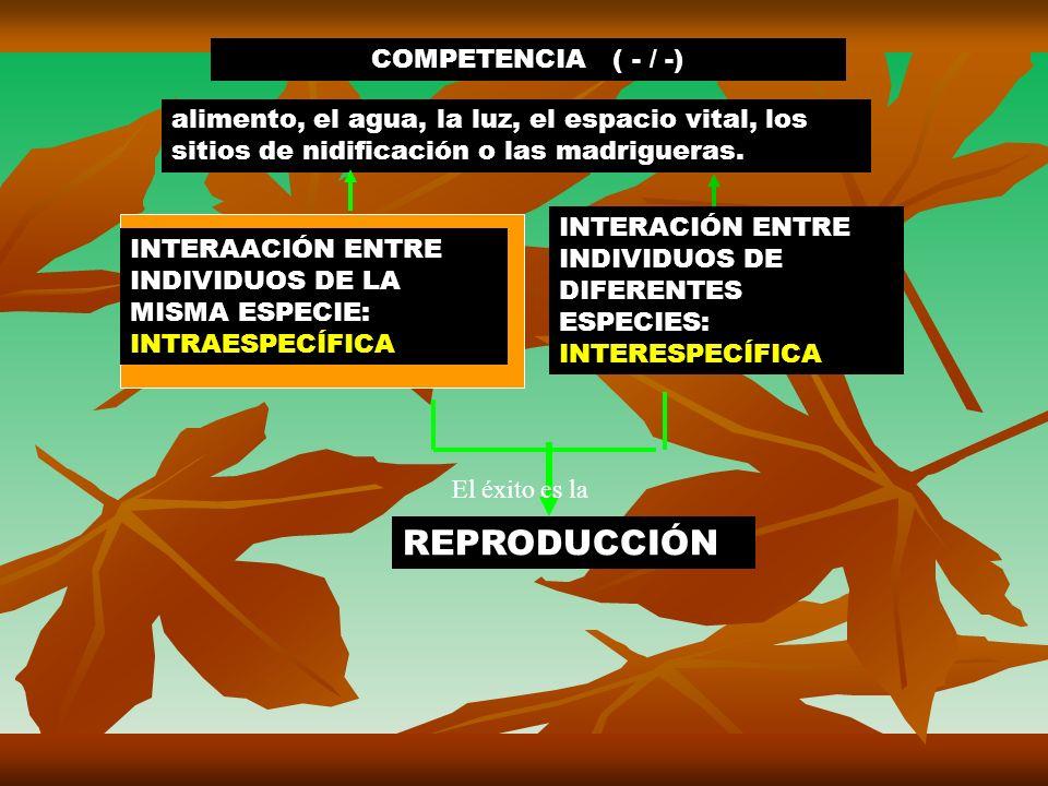 REPRODUCCIÓN COMPETENCIA ( - / -)