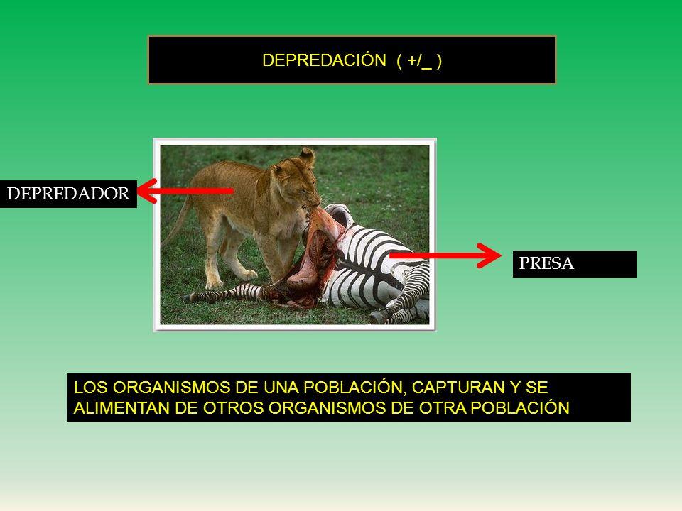 DEPREDACIÓN ( +/_ ) DEPREDADOR. PRESA.