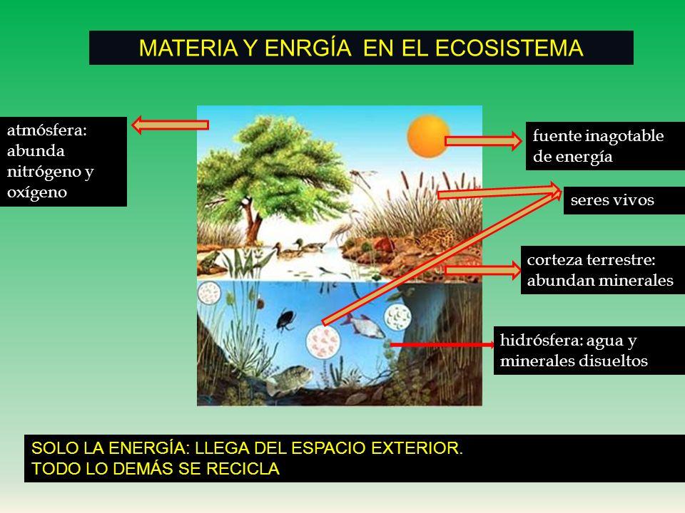 MATERIA Y ENRGÍA EN EL ECOSISTEMA