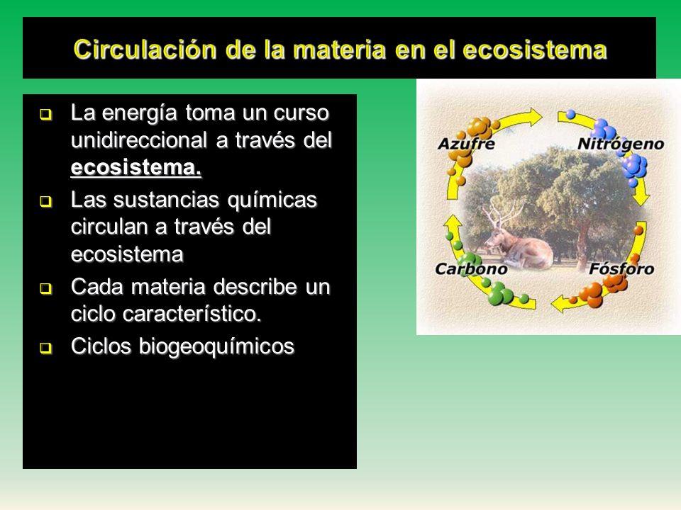 Circulación de la materia en el ecosistema