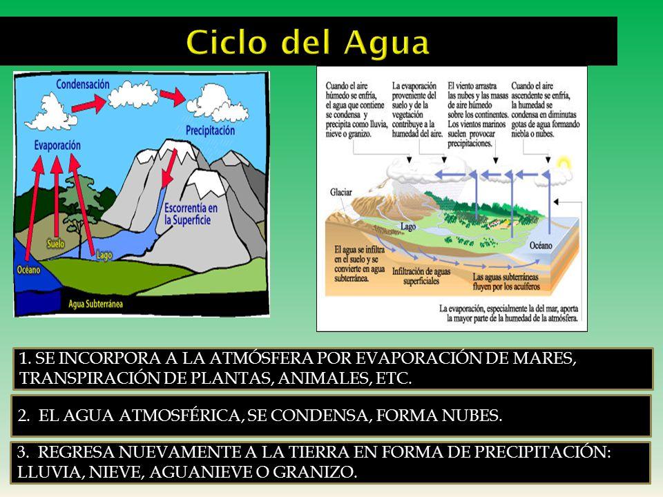 Ciclo del Agua1. SE INCORPORA A LA ATMÓSFERA POR EVAPORACIÓN DE MARES, TRANSPIRACIÓN DE PLANTAS, ANIMALES, ETC.