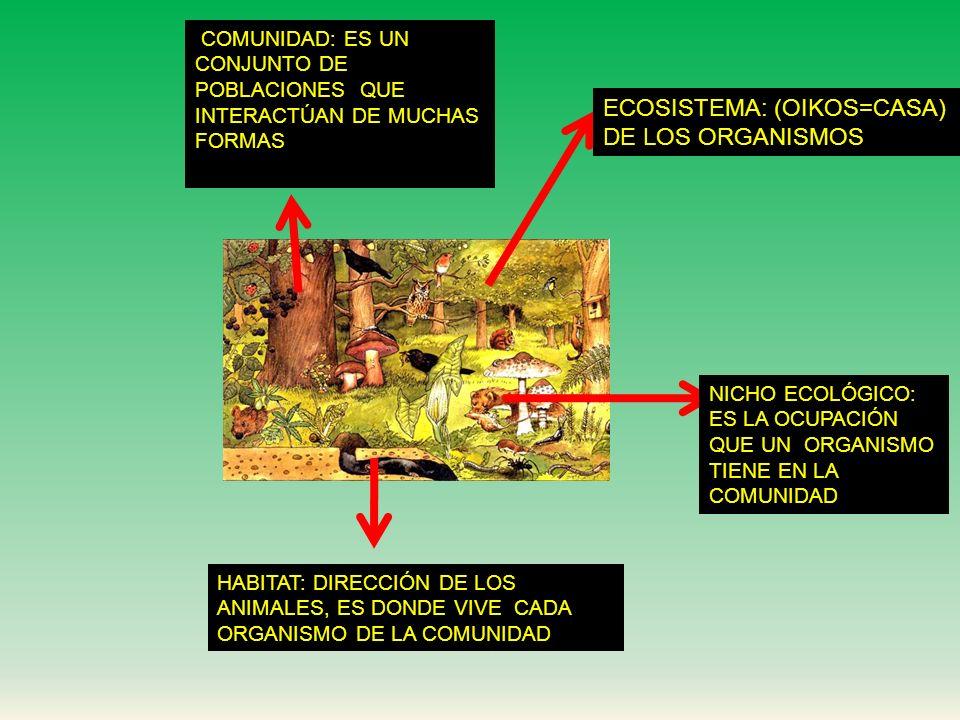 ECOSISTEMA: (OIKOS=CASA) DE LOS ORGANISMOS