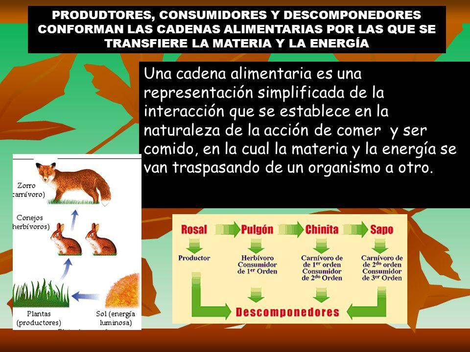 PRODUDTORES, CONSUMIDORES Y DESCOMPONEDORES CONFORMAN LAS CADENAS ALIMENTARIAS POR LAS QUE SE TRANSFIERE LA MATERIA Y LA ENERGÍA