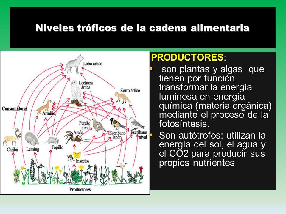 Niveles tróficos de la cadena alimentaria