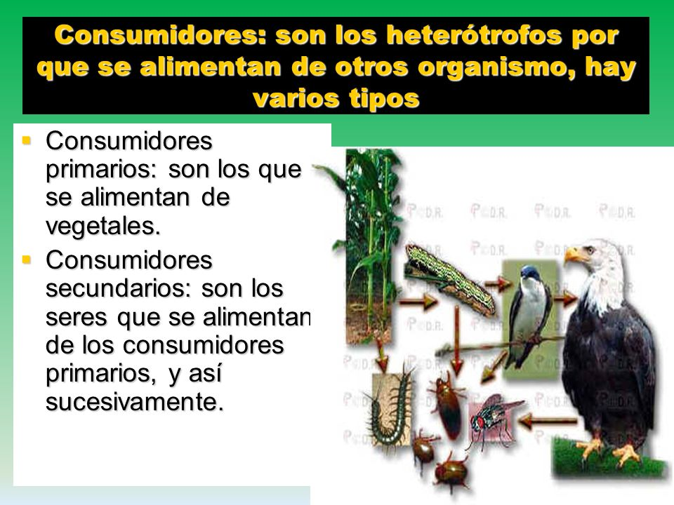 Consumidores: son los heterótrofos por que se alimentan de otros organismo, hay varios tipos