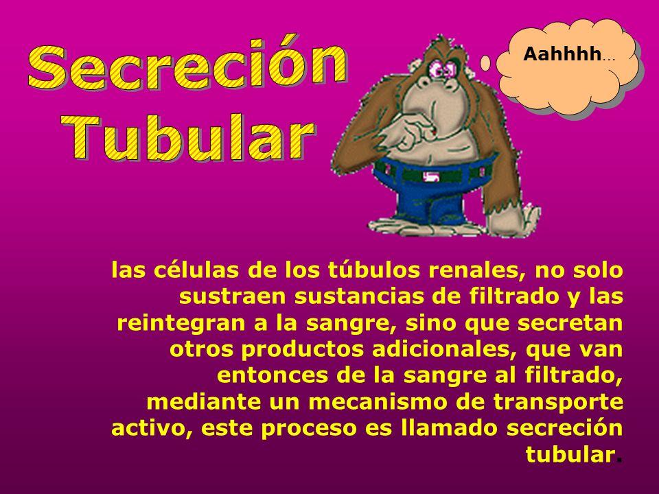 Secreción Tubular. Aahhhh...