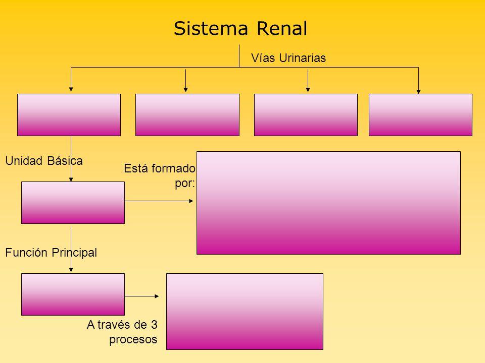 Sistema Renal Vías Urinarias Unidad Básica Está formado por: