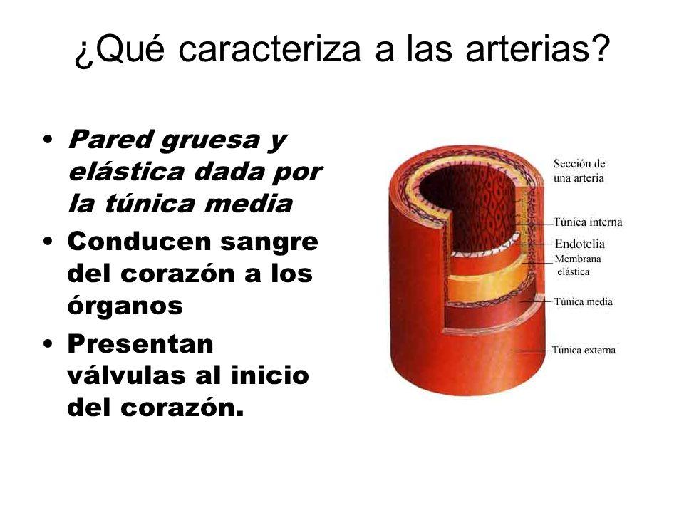 ¿Qué caracteriza a las arterias