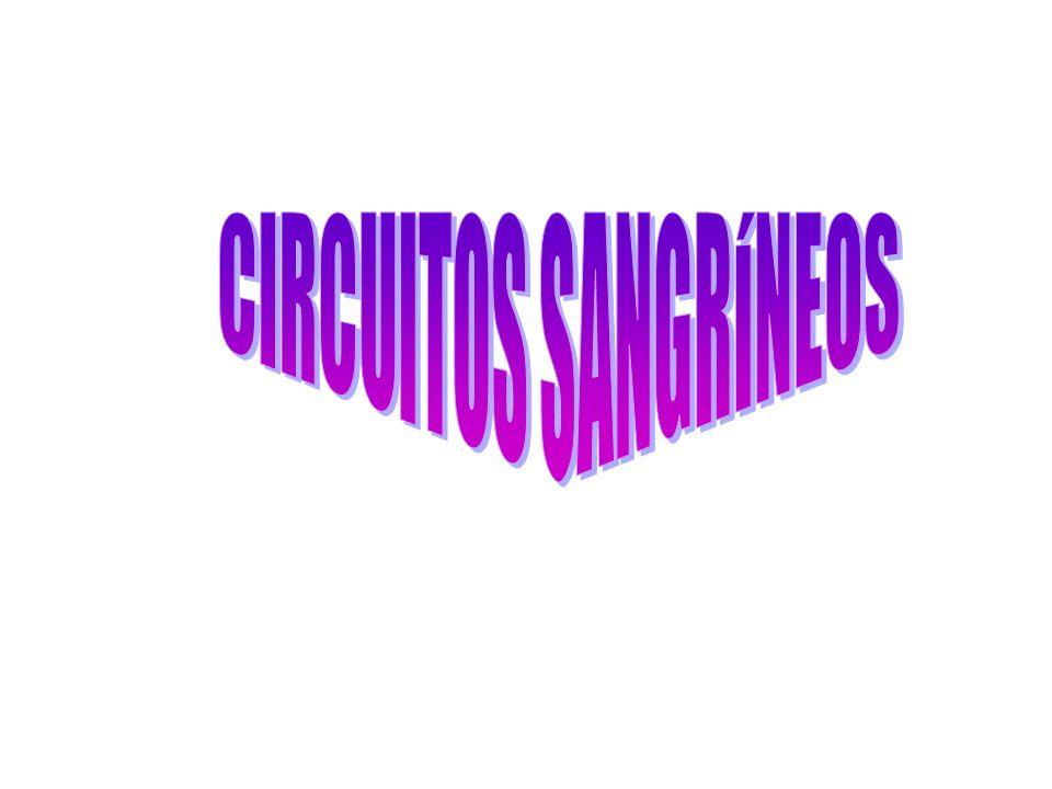CIRCUITOS SANGRÍNEOS