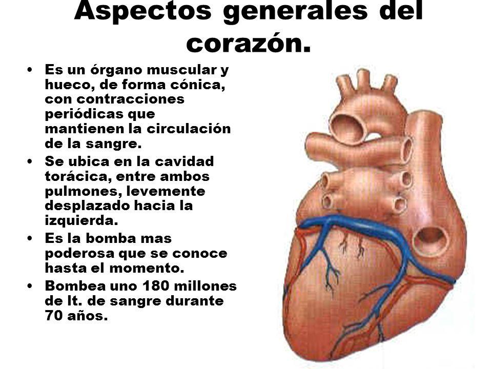 Aspectos generales del corazón.