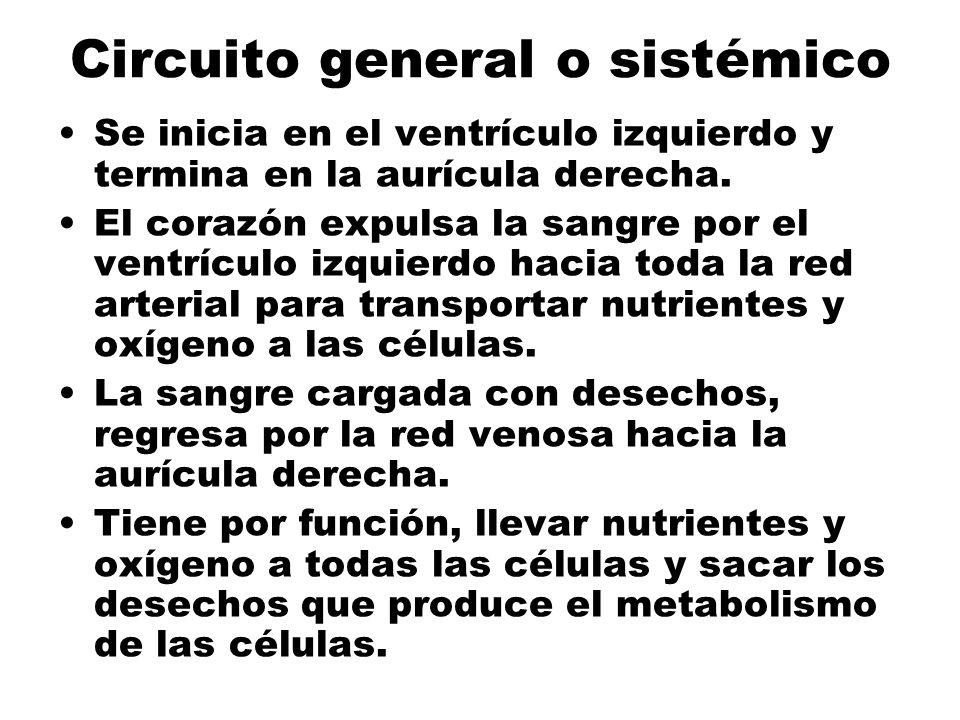 Circuito general o sistémico