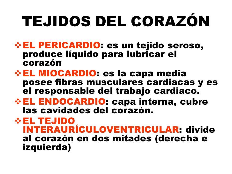 TEJIDOS DEL CORAZÓN EL PERICARDIO: es un tejido seroso, produce líquido para lubricar el corazón.