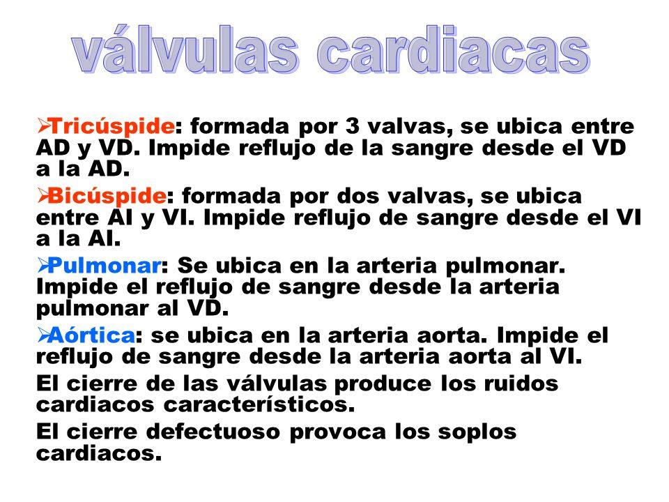 válvulas cardiacasTricúspide: formada por 3 valvas, se ubica entre AD y VD. Impide reflujo de la sangre desde el VD a la AD.